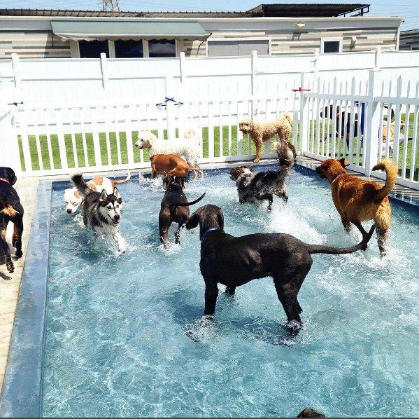 Bark City Dog Daycare & Boarding