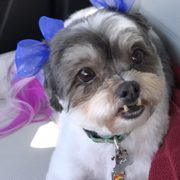 Pets earth 28 photos 22 reviews pet stores 8410 s 73rd plz photo of pets earth papillion ne united states best groomers solutioingenieria Images