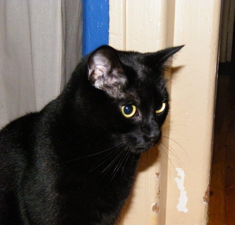 The Cocalico Cat & Gingham Dog Animal Hospital
