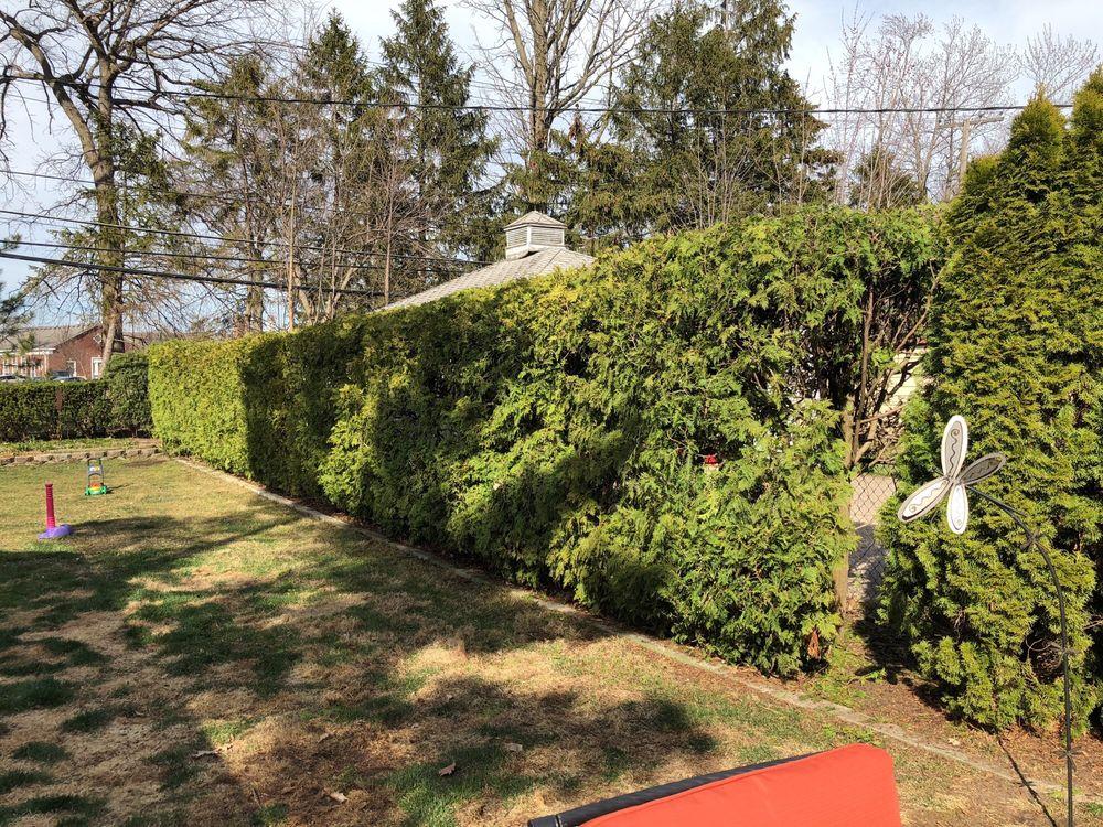 AAA-McDonald Tree Service: 1346 Grayton St, Grosse Pointe Park, MI