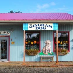 gingham dog