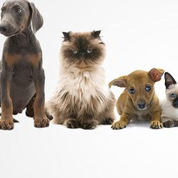 Pets Place Grooming And Pet Shop - Pet Groomers - 1272 SW