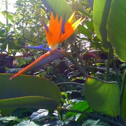 Photo Of Wellesley College Botanic Gardens   Wellesley, MA, United States