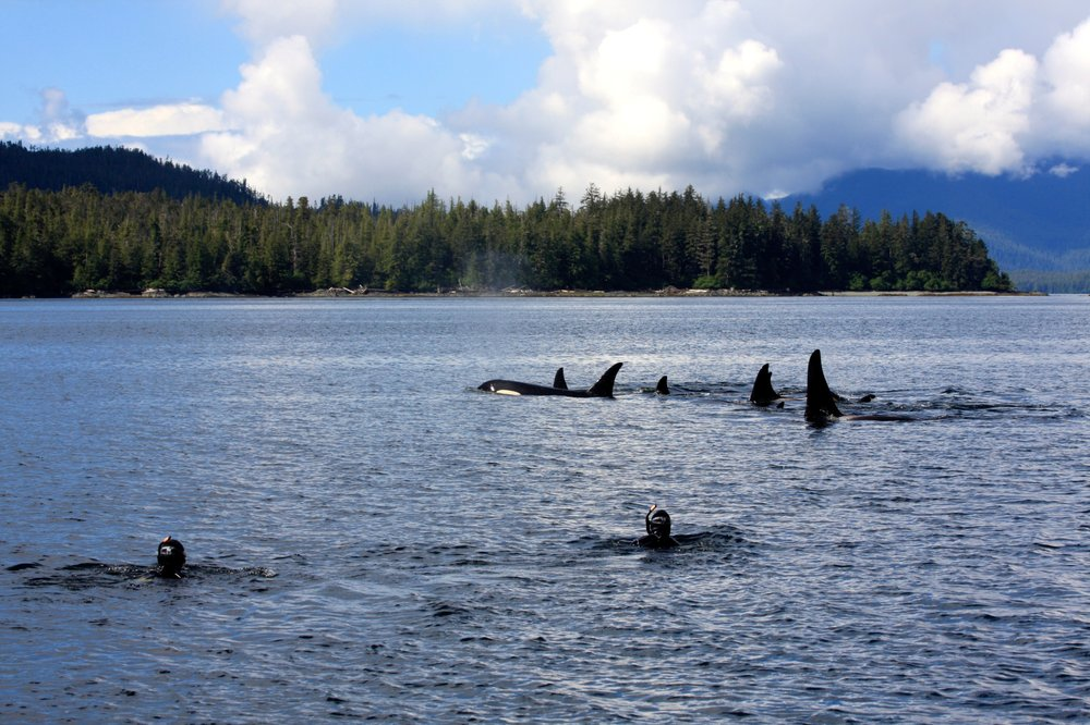 Snorkel Alaska: 4031 S Tongass Hwy, Ketchikan, AK