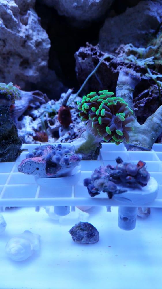 Reefs2go: 3350 Ulmerton Rd, Clearwater, FL