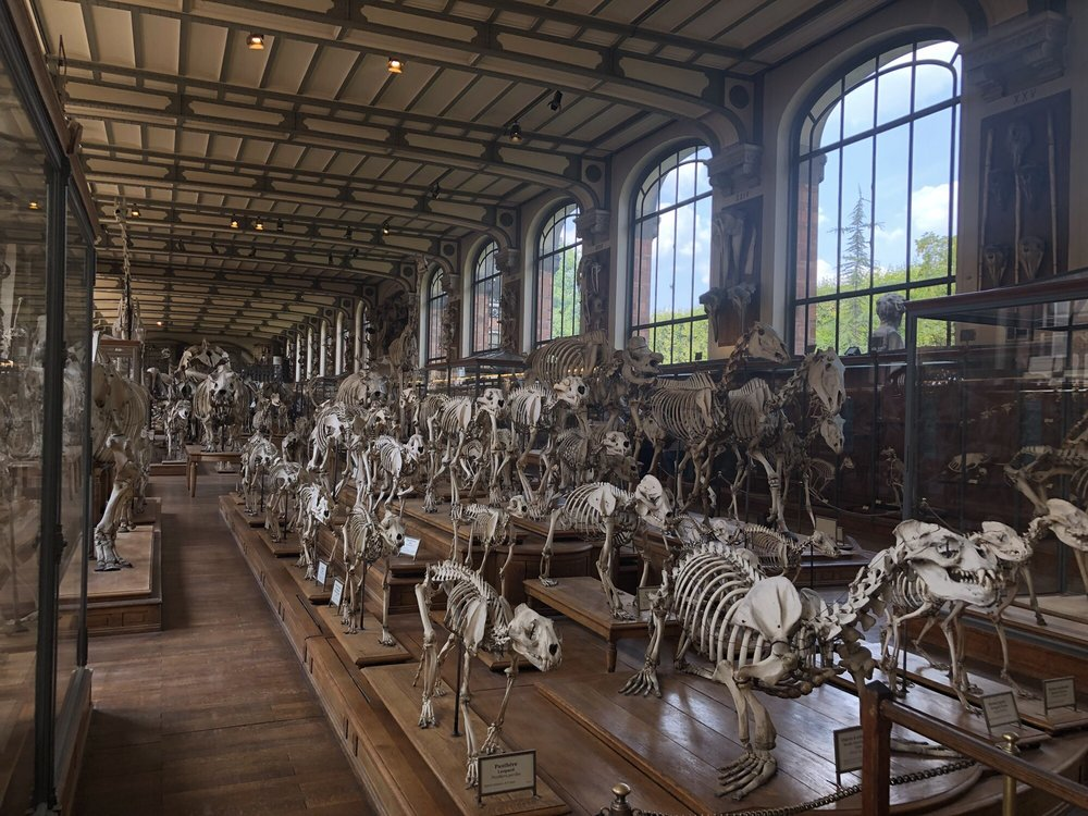 Musée National d'Histoire Naturelle