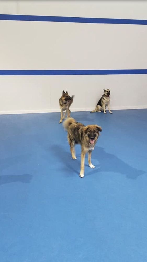 Tecla's K9 Academy: 7111 Dorsey Run Rd, Elkridge, MD