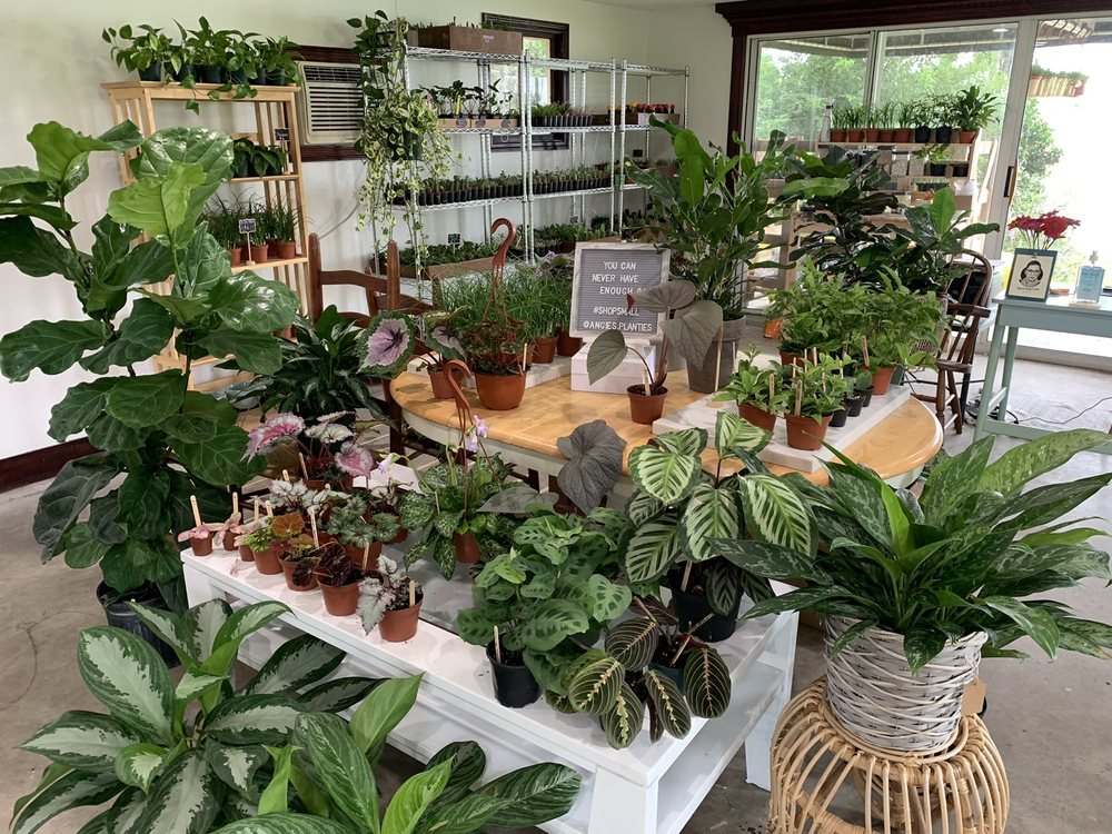 Angie's Planties: 9333 County Rd 561, Clermont, FL