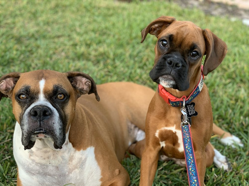 Chickasaw Trail Animal Hospital: 8555 Curry Ford Rd, Orlando, FL