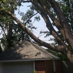 Out On A Limb Tree Service LLC - 2019 All You Need to Know