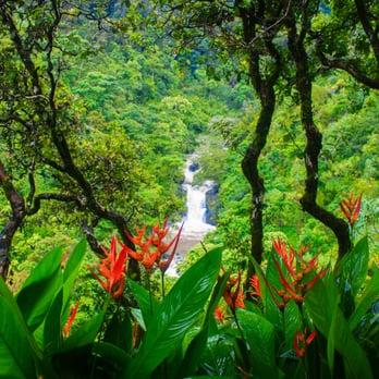 Garden of eden 423 photos 130 reviews botanical - Where is the garden of eden today ...