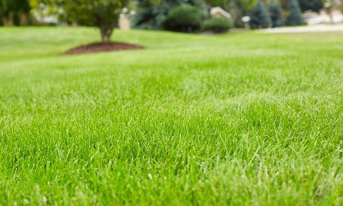 Lawn Doctor: 6410 Royce Dr, Marblehead, OH