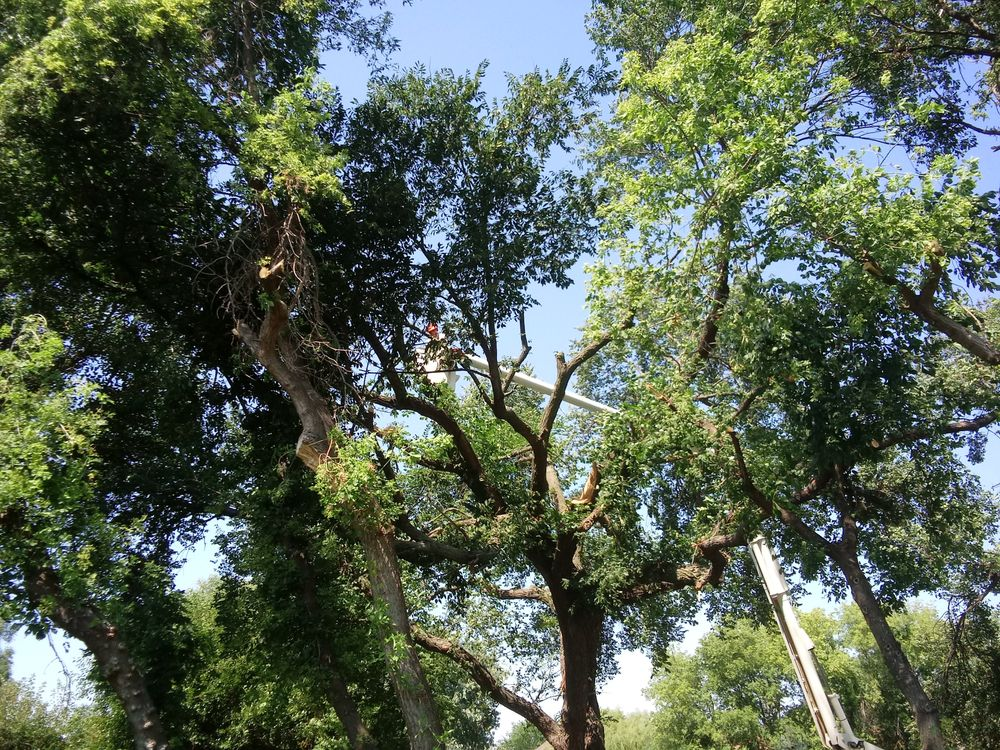 Torpy Tree Service: 2856 S 167th St, Omaha, NE