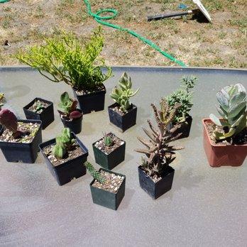 Photo Of Ventura Cactus And Succulents Ca United States My Haul