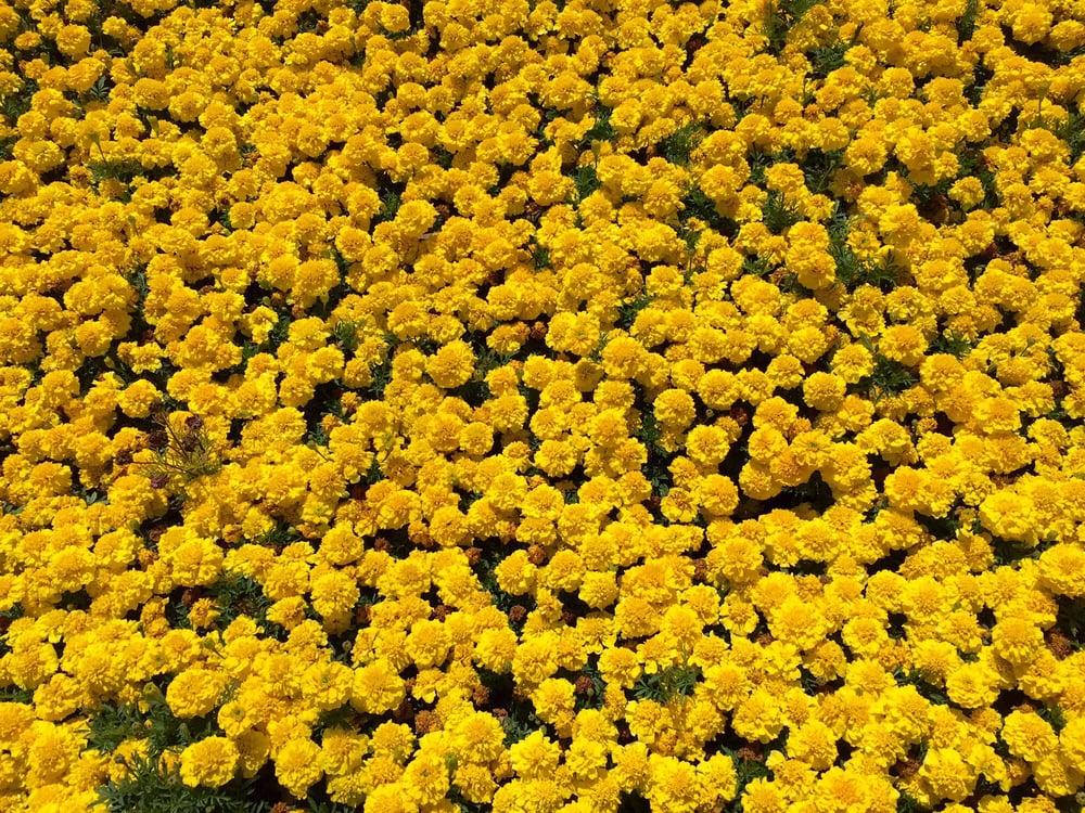Gardena Hills Nursery: 12597 S Budlong Ave, Los Angeles, CA