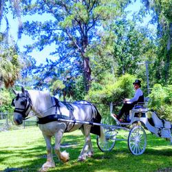 Top 10 Best Carriage Ride In Savannah Ga Last Updated April 2019