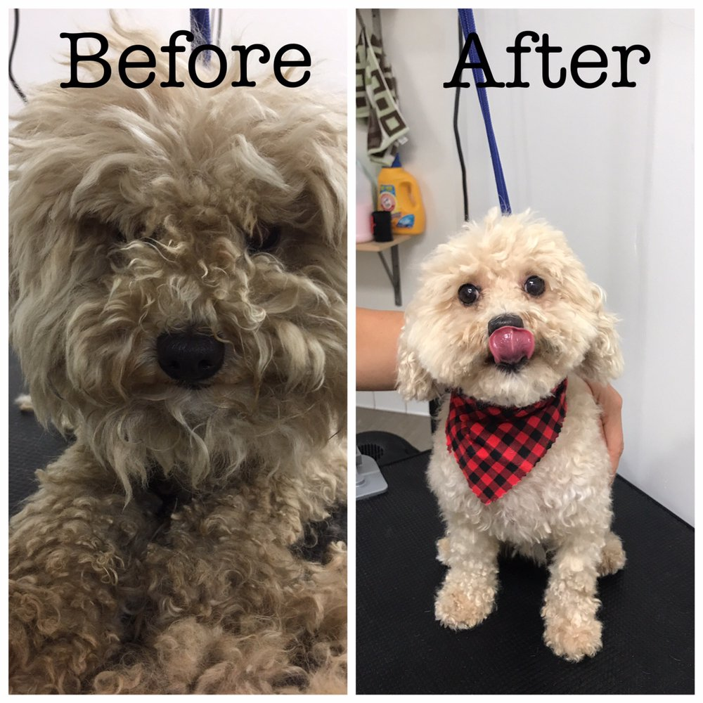 Charly before and after the grooming yelp for 4 paws grooming salon