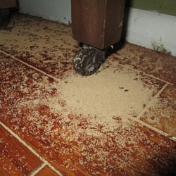 Termite Amp Pest Control Pest Control Cape Coral Fl