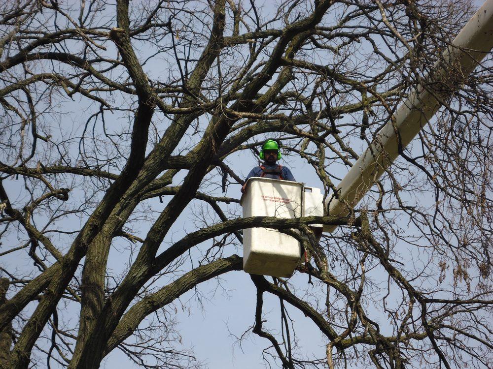 Winkler's Tree & Landscaping: Bellwood, IL