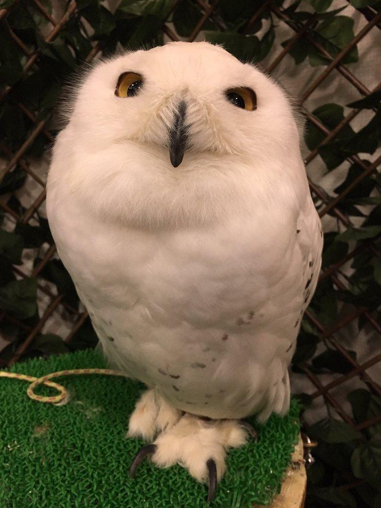 Oz Owl Cafe