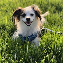 Gary Maria's Professional Dog Training - (New) 99 Photos & 119