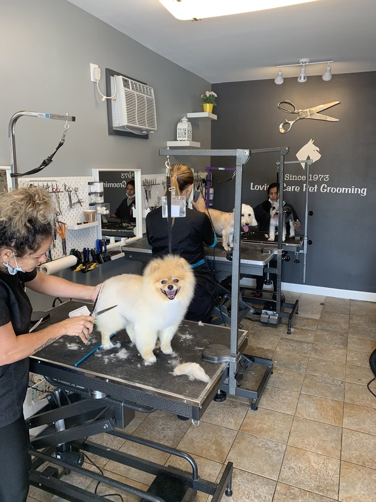 Loving Care Pet Grooming: 5311 W Broward Blvd, Plantation, FL