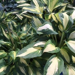 garden centers rochester ny. Photo Of Case Garden Center - Rochester, NY, United States. Hostas Centers Rochester Ny