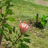 Kula Botanical Gardens   215 Photos U0026 61 Reviews   Parks   638 Kekaulike  Ave, Kula, HI   Phone Number   Yelp