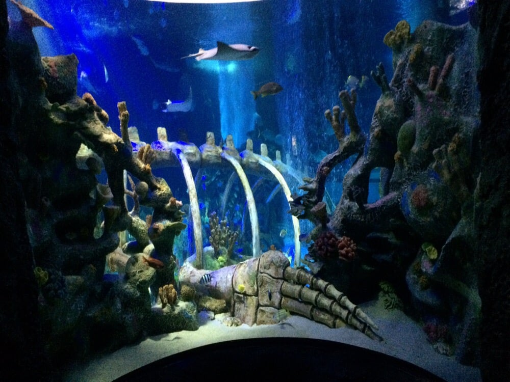 Beautiful Concave Aquarium Where You Can Walk Up To The