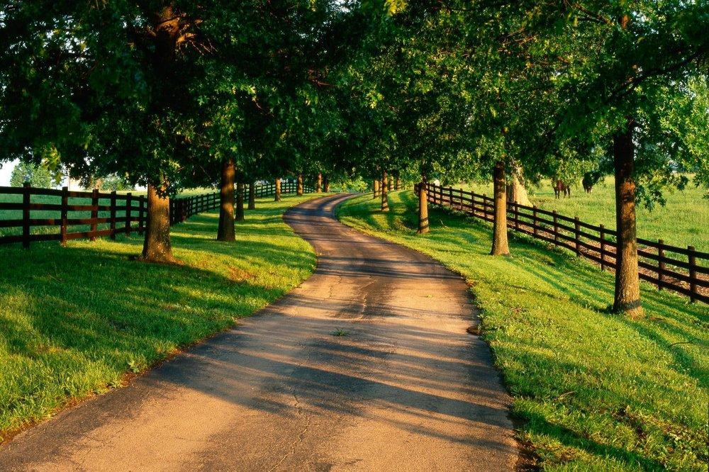 DMA Tree Service: 610 County Rd 481, Teague, TX