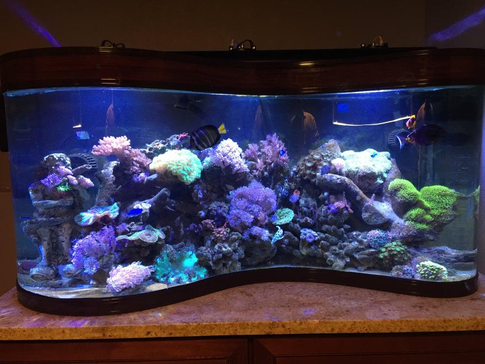 Aqua Lab Aquaria 43 Photos 35 Reviews Aquarium