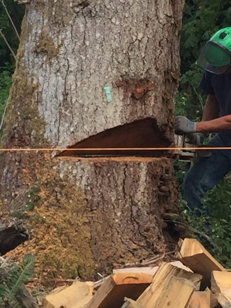 Archon Tree Services - 38 Photos - Arboriculture et élagage - 14105