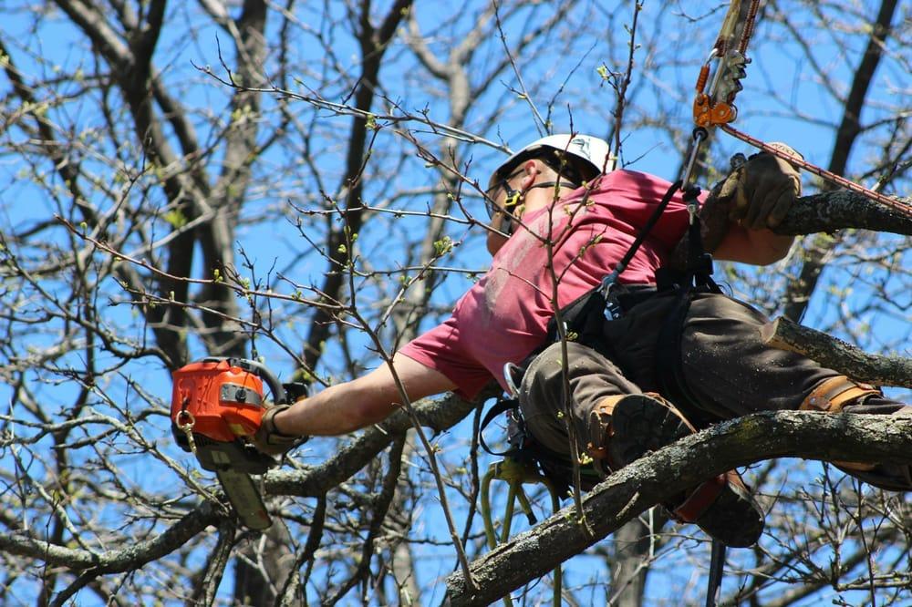 Fran's Tree Service: 8142 Red Oak Dr, Saint Paul, MN