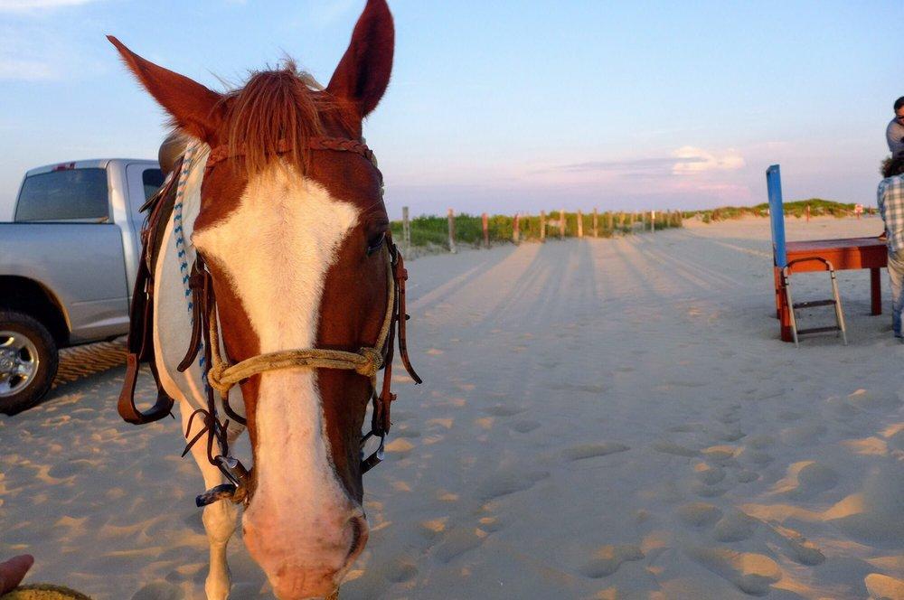 Galveston Island Horse and Pony Rides: 1929 Boddeker Rd, Galveston, TX