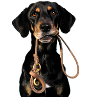 Carolina Pet Sitters: 19 Calley Ct, Columbia, SC