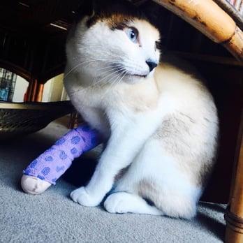 Berkeley Cat And Dog Hospital