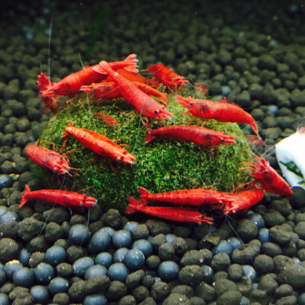 Lotus Aquarium