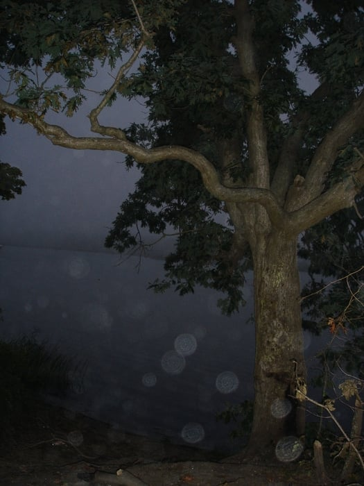 Hanging Tree: Grove Ln, Patchogue, NY