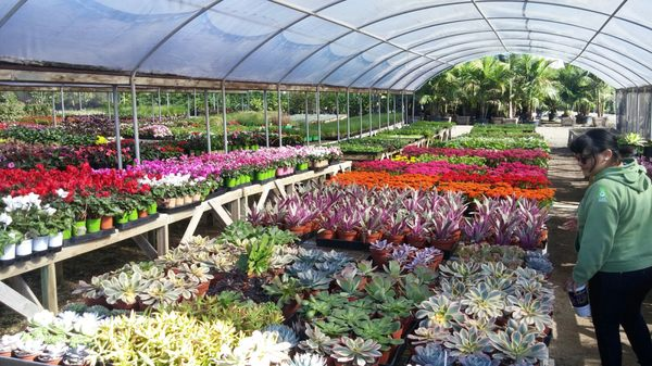 Briggs Tree Co Whole Nursery 1111 Poinsettia Ave Vista Ca Nurseries Mapquest