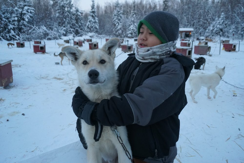 Cotters Sled Dog: Nenana, AK