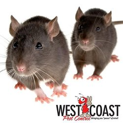 West Coast Pest Control - 40 Photos & 83 Reviews - Pest