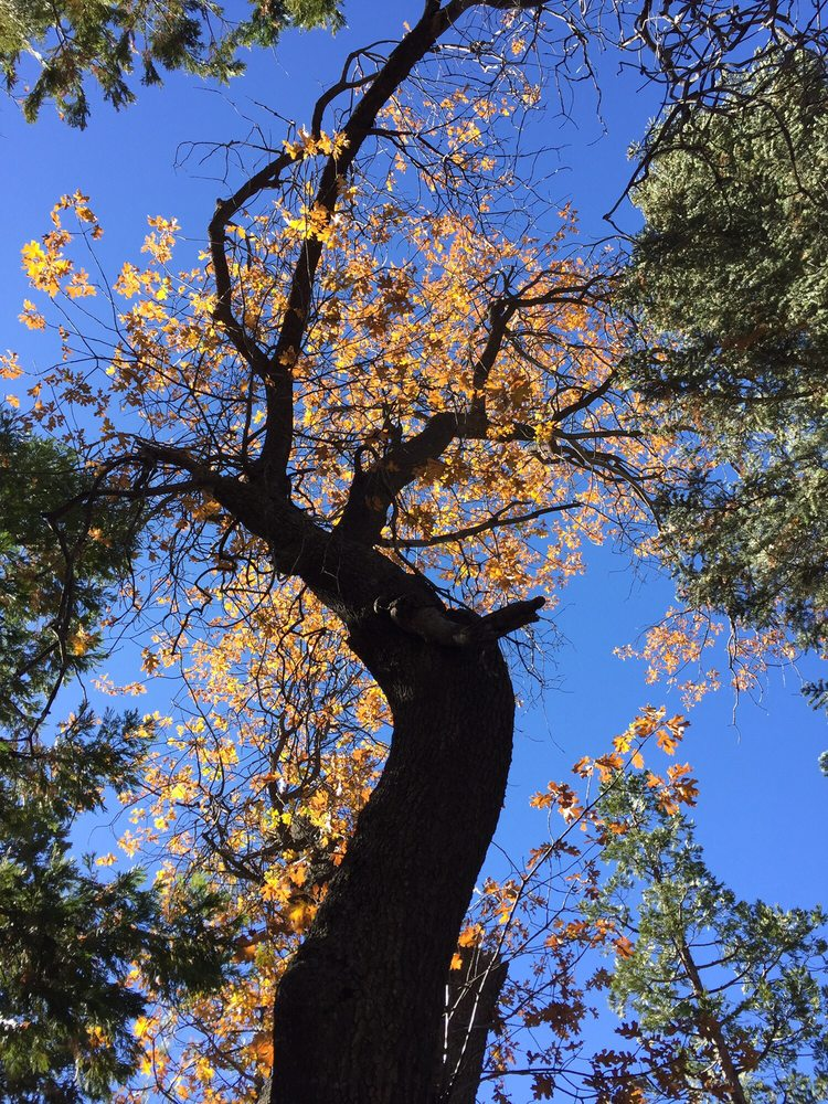 Ernie Maxwell Scenic Trail: Idyllwild-Pine Cove, CA