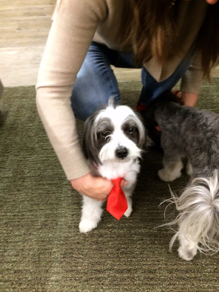 Everyone at work loved his business attire yelp for A perfect pet salon