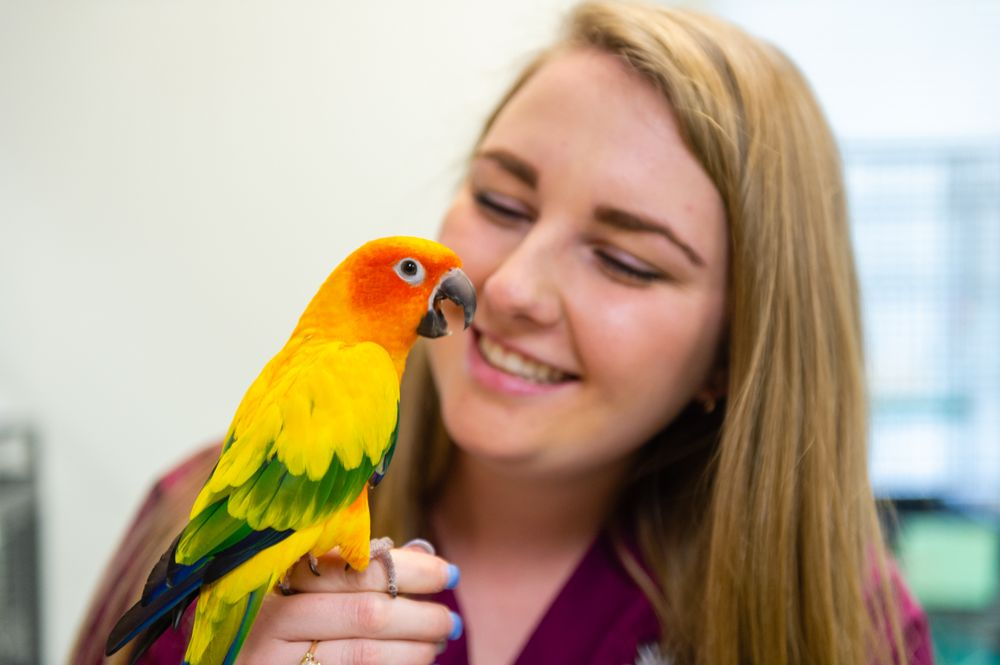 Avian And Exotic Animal Care