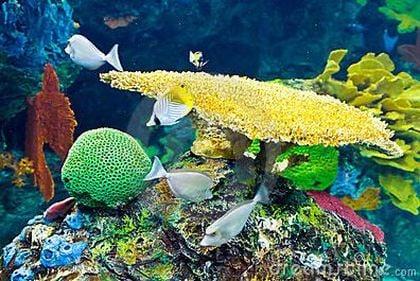American Aquarium Service Aquarium Services Westwood Nj Phone Number Yelp