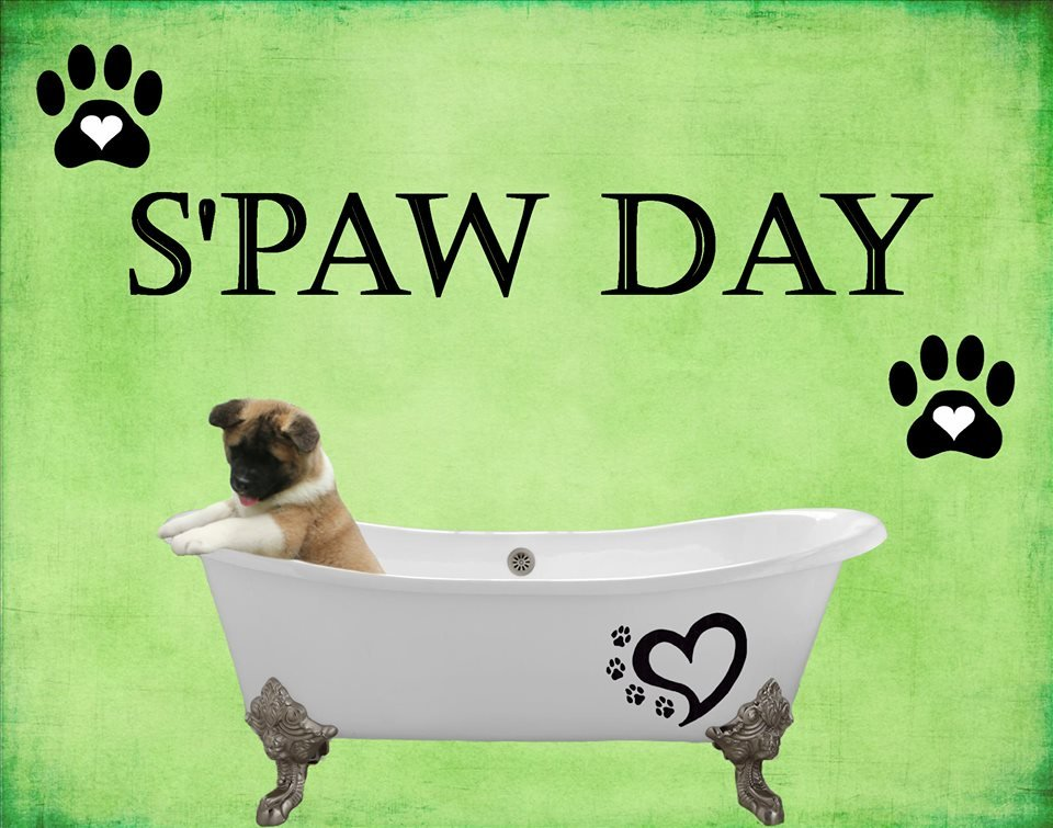 S'paw Day: 21220 North Bayside Rd, Cheriton, VA
