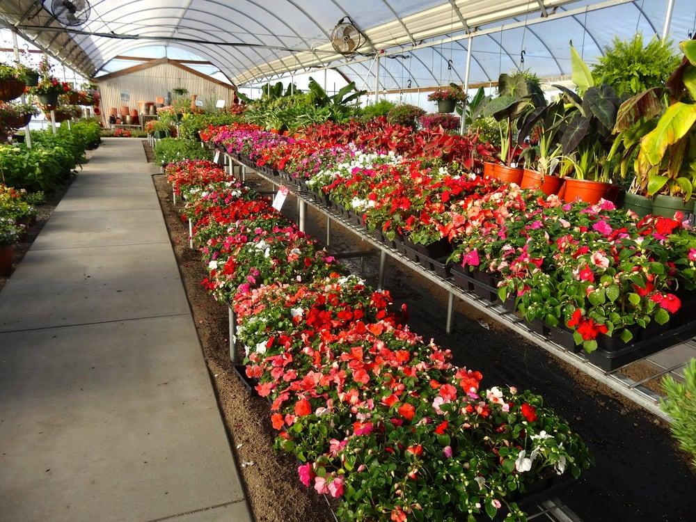 Des' Veggies Nursery & Garden Center: 160 Mulberry Ln, Wilson, OK