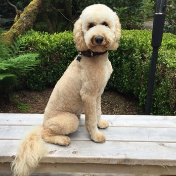 Nv Energy Phone Number >> Best In Show Dog Grooming - 31 Photos & 22 Reviews - Pet Groomers - 519 Chetco Ave, Brookings ...