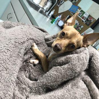 The Pet Emergency Room - 31 Photos & 85 Reviews - Veterinarians ...