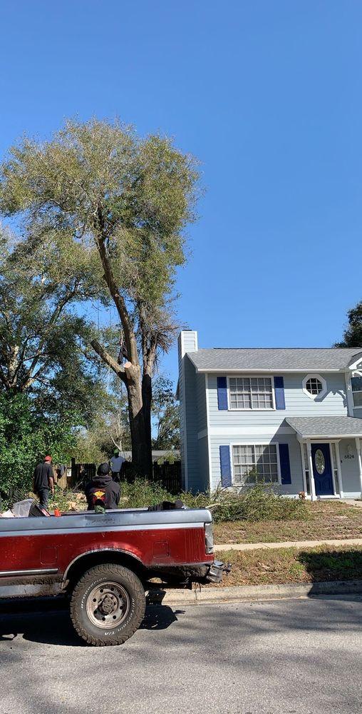The Magic Rake Tree And Landscaping Service: Orlando, FL